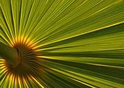 Palm Fron Print by Sabrina L Ryan