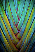 Frond Prints - Palm Frond Print by Atom Crawford