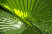 Frond Digital Art Prints - Palm Frond Print by David Lee Thompson