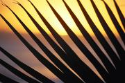 Dark Skies Posters - Palm Frond Detail Poster by Bill Schildge - Printscapes