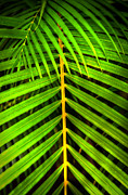 Frond Prints - Palm Frond Print by Kelly Wade