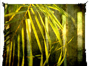 Frond Prints - Palm fronds 2 Print by Susanne Van Hulst