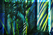 Frond Prints - Palm fronds 3 Print by Susanne Van Hulst