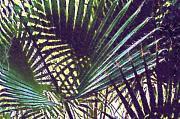 Robert Bissett - Palm Fronds