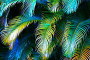 Hana Posters - Palm Leaves in Blue Poster by Karon Melillo DeVega