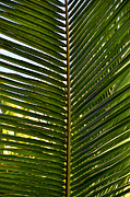 Tom Bell Framed Prints - Palm Leaves Framed Print by Tom Bell
