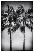 Canals Framed Prints - Palm Pair Framed Print by John Rizzuto