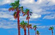 Green Clouds Prints - Palm Print Print by Debbi Granruth