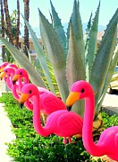 Flamingos Framed Prints - Palm Springs Flamingos 6 Framed Print by Randall Weidner