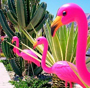 Pink Flamingo Art - Palm Springs Flamingos 7 by Randall Weidner