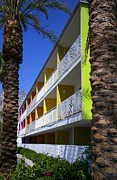 Palm Trees Fronds Posters - Palm Springs Saguaro Hotel 3 Poster by Randall Weidner