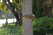 Rob Nelms - Palm Squirrel