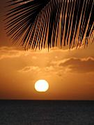 Palm Tree Greeting Cards - Palm Sunset Hawaii by Dustin K Ryan