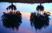 Overhang Photo Framed Prints - Palm Sunset Reflection Framed Print by Ray Laskowitz - Printscapes