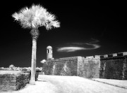 Jeff Holbrook Metal Prints - Palm Tree and Castillo Metal Print by Jeff Holbrook