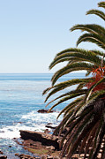 Laguna Beach Posters - Palm Tree and Ocean Poster by Paul Velgos