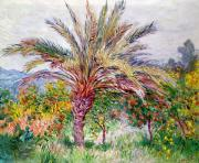 Italian Landscapes Posters - Palm Tree at Bordighera Poster by Claude Monet
