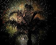 Palm Tree Greeting Cards - Palm Tree Fireworks by David Lee Thompson