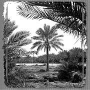 Fuad Azmat - Palm Tree
