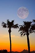 Palm Tree Full Moon Sunset Print by James BO  Insogna