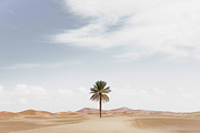 Fan Palm Framed Prints - Palm Tree In Desert Landscape Framed Print by Roine Magnusson