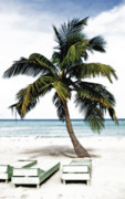 The Good Life Posters - Palm Tree in Jamaica Poster by Glennis Siverson