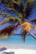 Palm Tree On A Caribbean Beach Print by George Oze