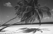 Sandy Beaches Prints - Palm tree shadow on sand Print by Anonymous