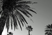 Nadyne Bell - Palm Tree Sky