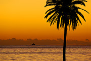 Orange Beach Prints - Palm Tree Sunset Print by Carlos Caetano