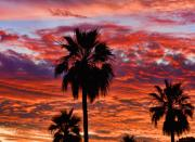 Sunset Posters Framed Prints - Palm Tree Sunset Framed Print by James Bo Insogna