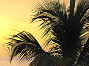 Kimberly Perry - Palm Tree Sunset