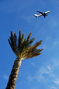 Azur Posters - Palm tree with aeroplane flying in background Poster by Sami Sarkis