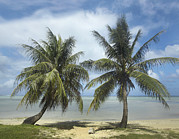 Guam Prints - Palm Trees, Agana Beach, Guam Print by Tim Fitzharris