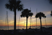 Gulf Of Mexico Scenes Framed Prints - Palm Trees And Catamarans Line A Gulf Framed Print by Raymond Gehman