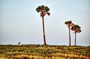 Orange Digital Art Originals - Palm Trees and Heron by Michael Thomas