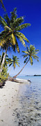 Bora Bora Photos - Palm Trees and Motorized Dinghy by Jeremy Woodhouse