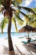 Antilles Prints - Palm Trees and Palapa Print by George Oze