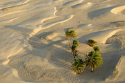 SAHARA Art - Palm trees and sand dunes in Sahara Desert by Sami Sarkis
