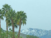 Sky Mountaintops Posters - Palm Trees and Snow Tops Poster by Deborah Smolinske