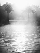 Palm Trees And Steaming Swimming Pool Print by Blend Images/Trinette Reed
