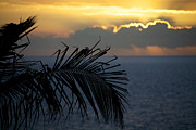 Tropical Photographs Posters - Palm trees at sunset Poster by Ivan SABO