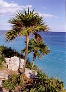 Carribean Sea Framed Prints - Palm Trees at Tulum Framed Print by John Malone