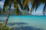 Moorea Photos - Palm Trees Cast A Shadow In Blue Water by Hibberd, Shannon