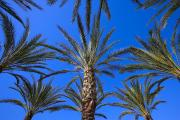 Husks Prints - Palm Trees Print by Don Hammond