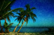 Beach Scene Photos - Palm trees in Key West by Susanne Van Hulst