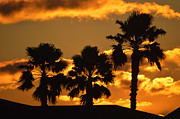 Reflection Of Sun In Clouds Metal Prints - Palm Trees in Sunrise Metal Print by Susanne Van Hulst
