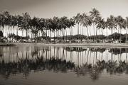 Ala Moana Metal Prints - Palm Trees Metal Print by Mary Van de Ven - Printscapes