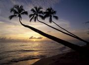 Tropical Oceans Art - Palm Trees On Beach At Sunset by Axiom Photographic