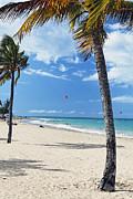 Palm Trees On Ocean Park Beach Print by George Oze
